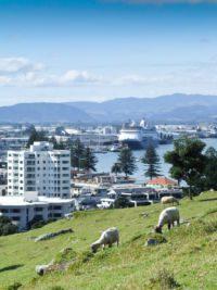 View of Tauranga from Mount Maunganui